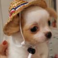 麦わら帽子の天使